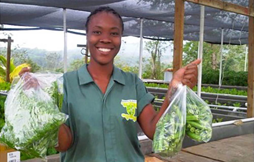 Smallholder farmers have started climate-smart aquaponics agri-business enterprises in Jamaica. Credits: INMED