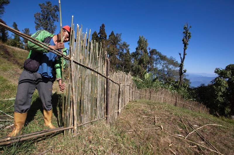 Building a fence in Rambi Village, Darjeeling, West Bengal, India