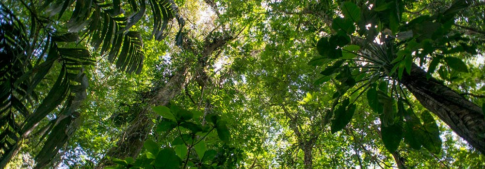 The future of forests and climate change: what have we achieved so far and what's next?