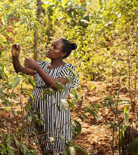 Doors open for Ethiopian women in climate-smart land use