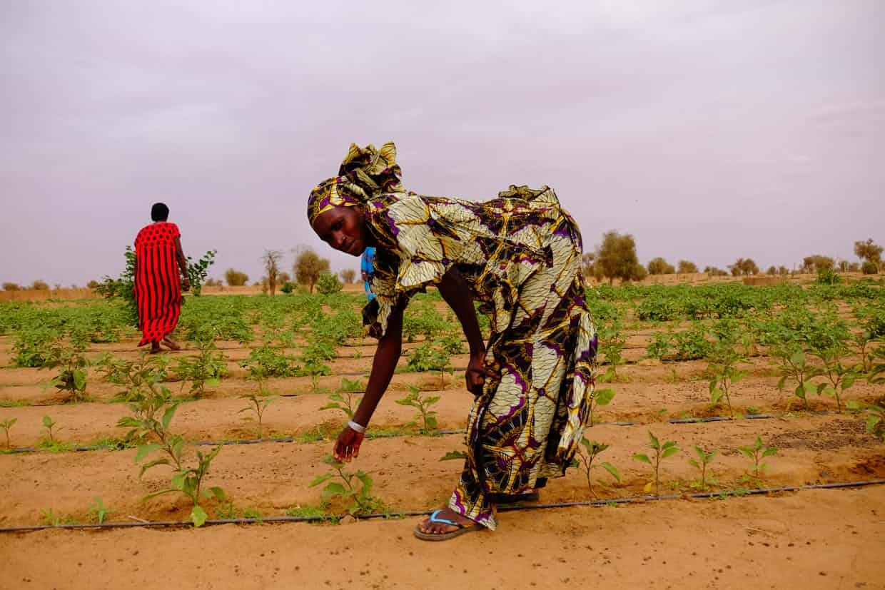 A woman in Koyli Alfa village in central Senegal shows a visitor some of the young plants sprouting in a garden planted by the Great Green Wall. | Connect4Climate