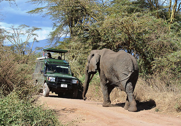 Up close and personal: an elephant encounters tourists in Tanzania. Photo: Magda Lovei/World Bank